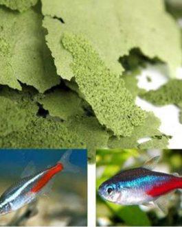Ocean Treat Spirulina Flake(100 gm)