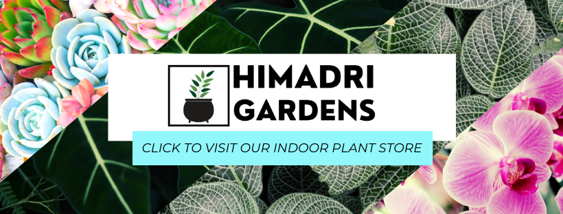 VISIT OUR INDOOR PLANT STORE